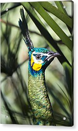 I Am Looking At You Too Acrylic Print by Nicholas Evans