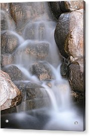 In The Midst Acrylic Print by Shawn Hughes