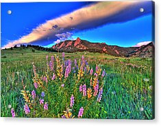 In The Moment Acrylic Print by Scott Mahon