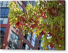 Inner City Autumn Acrylic Print