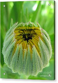 Inverted Acrylic Print by Tina Marie