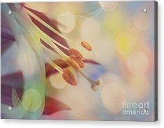 Joyfulness Acrylic Print by Aimelle