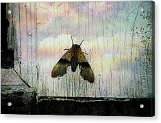 Just Arrived Acrylic Print by Shirley Sirois