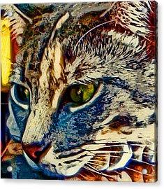 Just Chillin' Acrylic Print by David G Paul