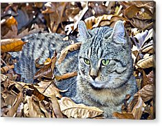 Acrylic Print featuring the photograph Kitten In Leaves by Susan Leggett