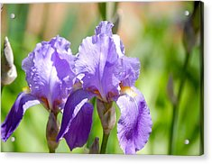 Acrylic Print featuring the photograph Lavender Iris I by Mary McAvoy