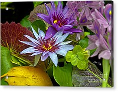 Acrylic Print featuring the photograph Lilies No. 32 by Anne Klar