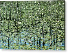 Lilly Pond Acrylic Print