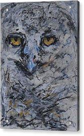 Lipstick Owl Acrylic Print by Iris Gill