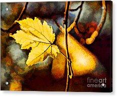 Lone Leaf Acrylic Print by Darren Fisher