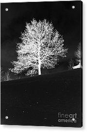 Lone Tree Acrylic Print by David Bearden