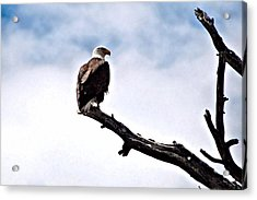 Lonely Sentenel Acrylic Print by Don Mann