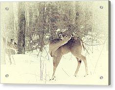 Looking Back Acrylic Print by Karol Livote