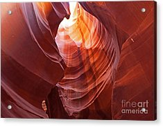 Acrylic Print featuring the photograph Looking Up by Bob and Nancy Kendrick