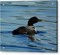 Acrylic Print featuring the photograph Loon 2 by Steven Clipperton