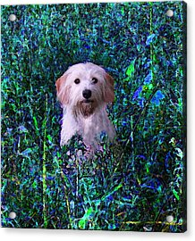 Lost In The Paint Acrylic Print by Brandy Nicole Neal