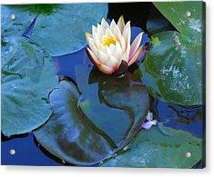 Lotus 2 Acrylic Print by Sarah Vandenbusch