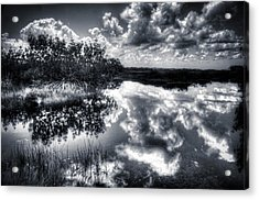 Mangroves In The Morning Acrylic Print by Bob Hartmann
