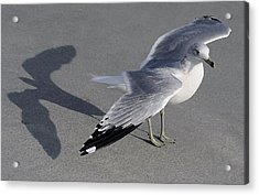 Me And My Shadow Acrylic Print by Paulette Thomas