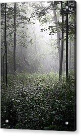 Misty Morning Acrylic Print by Rick Rauzi