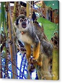 Monkeyshines Acrylic Print by Elinor Mavor