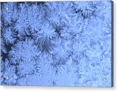 Morning Frost Acrylic Print
