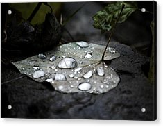 Acrylic Print featuring the photograph My Heart Weeps by Peggy Franz