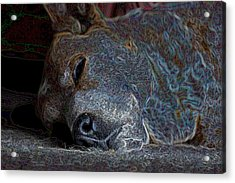 Nap Time Acrylic Print by One Rude Dawg Orcutt