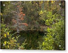 Natures Frame Acrylic Print by Cindy Rubin