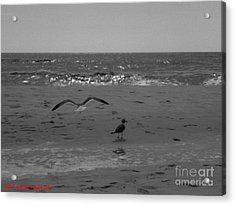 Acrylic Print featuring the photograph Navarre Beach by Janice Spivey
