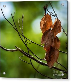 Never Let Go Acrylic Print by Bill Stone