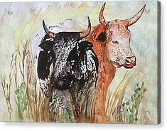 Nguni I. Acrylic Print by Paula Steffensen