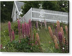 Norway, Hidra, Lupins And Lilies Acrylic Print by Keenpress
