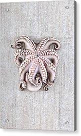 Octopus Acrylic Print by Fausto Favetta Photoghrapher