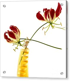 Orchid Acrylic Print by Bernard Jaubert