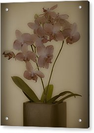 Acrylic Print featuring the photograph Orchid by James Bethanis