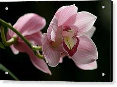 Orchid's  Mystery Acrylic Print by Valia Bradshaw