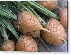 Organic Carrots (daucus Carota 'parmex') Acrylic Print by Maxine Adcock