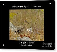 Out For A Stroll Acrylic Print by Dennis Hammer