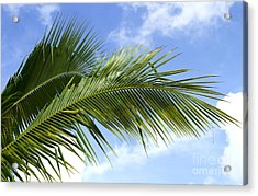 Palm  Acrylic Print by Blink Images
