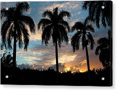 Acrylic Print featuring the photograph Palm Tree Silhouette by Karen Lee Ensley