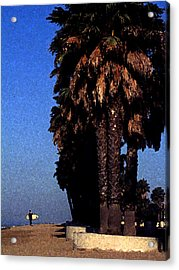 Palm Trees At Surfers Point Acrylic Print by Ron Regalado