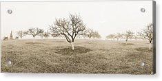 Peach Orchard Gettysburg Acrylic Print by Jan W Faul