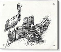 Pelican At Dockside Acrylic Print
