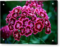 Pink Flower Acrylic Print by Andre Faubert