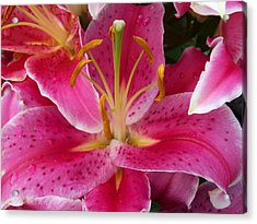 Pink Lily With Water Droplets Acrylic Print