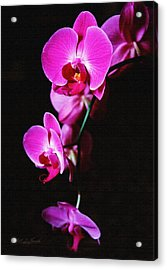Acrylic Print featuring the photograph Pink Orchid Trio by Robert Kernodle