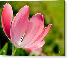 Pink Passion Acrylic Print by Christy Woods