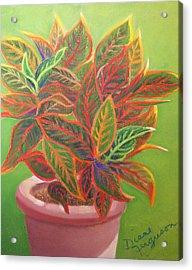 Plant Portrait I Acrylic Print by Diane Ferguson