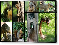 Please Don't Feed The Squirrels Acrylic Print by Elizabeth Hart